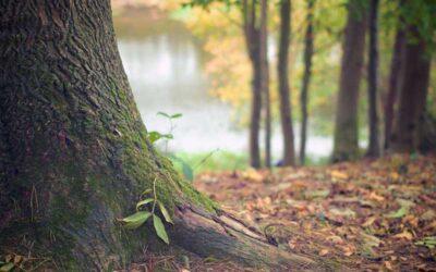Progetto I volti del bosco