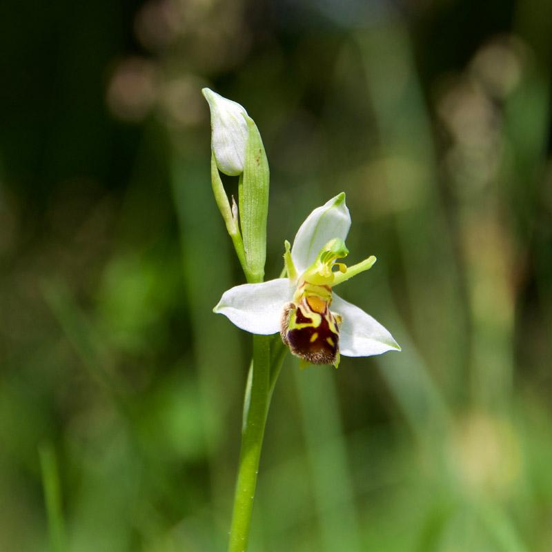 Traiettorie Instabili Villa di Serio orchidea